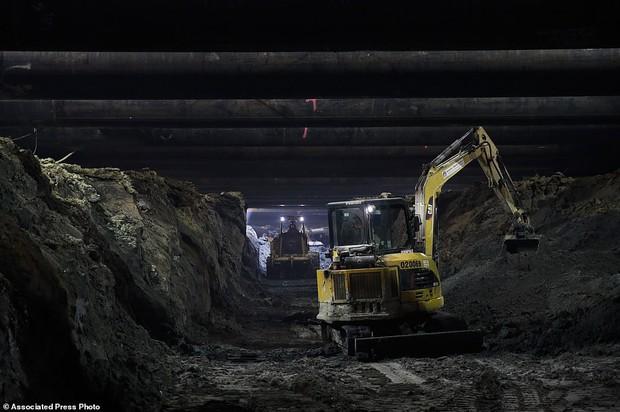 Đào đường hầm, công nhân ngỡ ngàng khi tìm thấy hóa thạch động vật 10,000 năm từ kỷ Băng Hà - Ảnh 5.