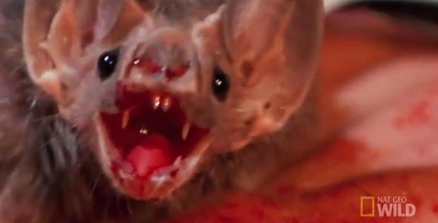 Những điều kỳ quái của lễ hội Halloween 31/10: Vì sao mèo đen bị cấm nhận nuôi dịp này? - Ảnh 10.