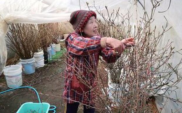 Đây là cách người Nhật hồi sinh những vùng quê xơ xác vì già hóa dân số - Ảnh 1.