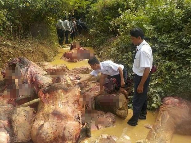 Thảm cảnh những chú voi châu Á: Hết chặt ngà đến bị lột da dã man để làm đồ trang sức - Ảnh 3.