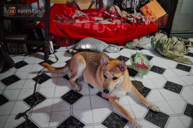 Gặp Gấu - chú chó cá tính nhất Sài Gòn: Chủ mua gì cũng xung phong xách hộ, không cho theo thì hờn mát bỏ ăn! - Ảnh 7.