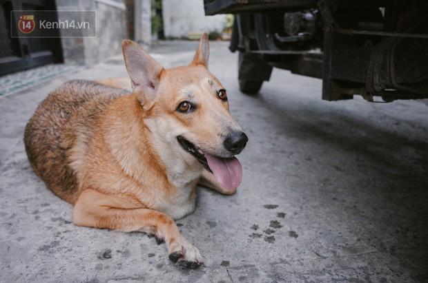 Gặp Gấu - chú chó cá tính nhất Sài Gòn: Chủ mua gì cũng xung phong xách hộ, không cho theo thì hờn mát bỏ ăn! - Ảnh 5.