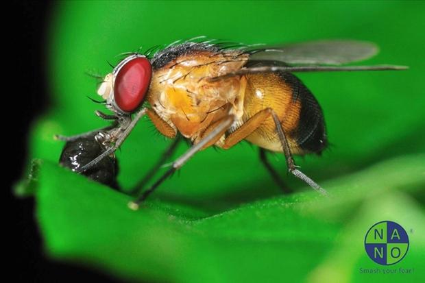 Bé bằng nửa hạt vừng nhưng loài sinh vật này lại đóng góp lớn trong nền nghiên cứu khoa học - Ảnh 1.
