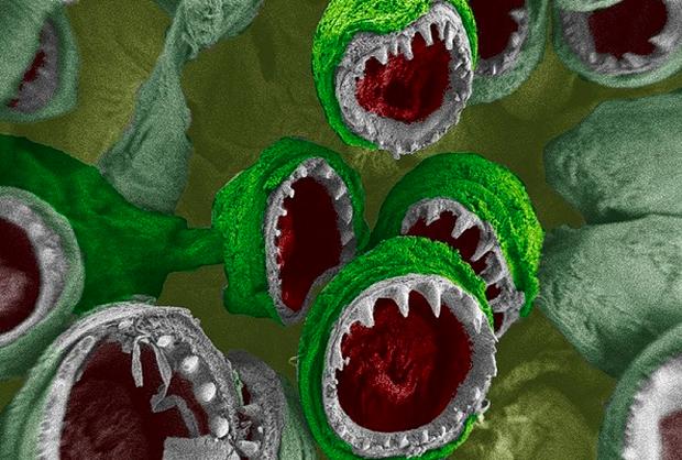 Đây là bộ mặt thật của sinh vật đang sống quanh ta khiến ai xem cũng muốn xỉu - Ảnh 8.