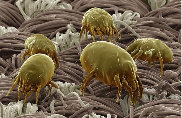 Đây là bộ mặt thật của sinh vật đang sống quanh ta khiến ai xem cũng muốn xỉu - Ảnh 1.