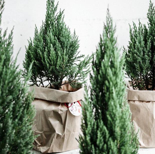 Noel năm nay, giới trẻ hai miền thi nhau mua cây tùng về chăm và chụp ảnh sống ảo - Ảnh 5.