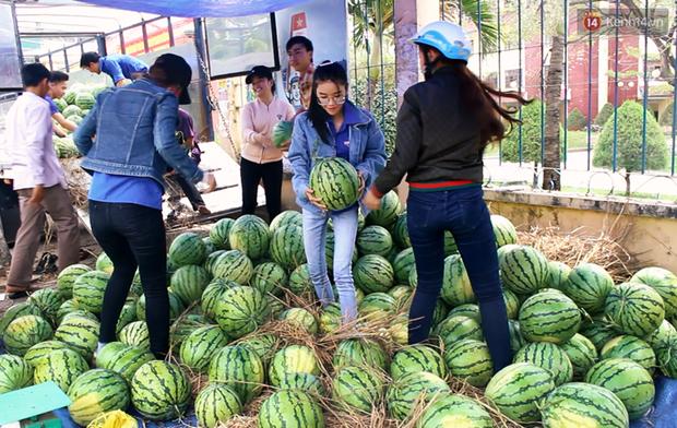 Nông dân Quảng Ngãi phải đem dưa hấu đổ cho bò ăn: Cần lắm sự chung tay giải cứu của cộng đồng - Ảnh 8.