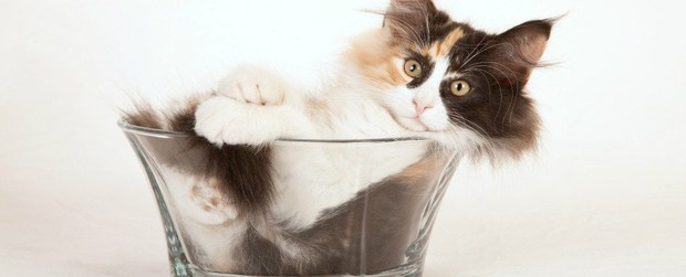 Mèo có phải là một loại chất lỏng? Đáp án cực bất ngờ nhé các bạn! - Ảnh 4.