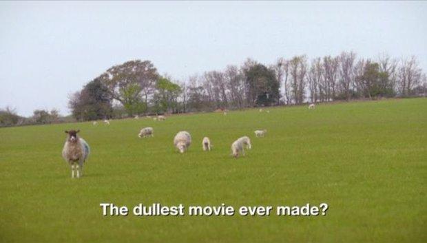 Bộ phim thảm họa thế giới: Suốt 8 tiếng chỉ chiếu cảnh cừu đi lại trên bãi cỏ - Ảnh 3.
