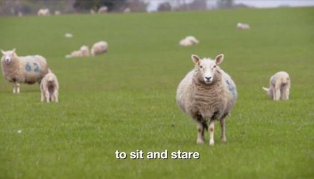 Bộ phim thảm họa thế giới: Suốt 8 tiếng chỉ chiếu cảnh cừu đi lại trên bãi cỏ - Ảnh 2.