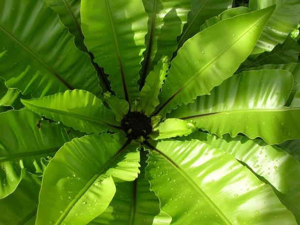 Khoa học tìm ra vì sao kích cỡ lá cây khác nhau - lá thì to vĩ đại, lá thì bé tin hin - Ảnh 3.