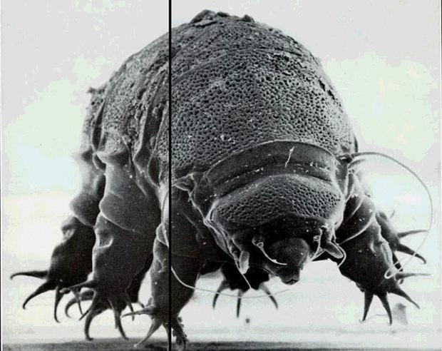 Đây là sinh vật bất tử duy nhất trên Trái đất, và cuối cùng khoa học đã tìm ra bí ẩn đằng sau chúng - Ảnh 1.