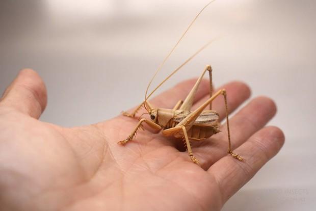 Bộ sưu tập côn trùng tre giống hệt đồ thật của nghệ nhân Nhật Bản - Ảnh 11.
