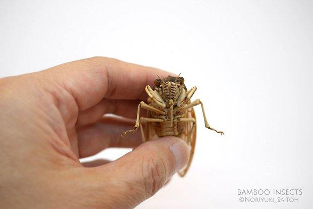 Bộ sưu tập côn trùng tre giống hệt đồ thật của nghệ nhân Nhật Bản - Ảnh 1.