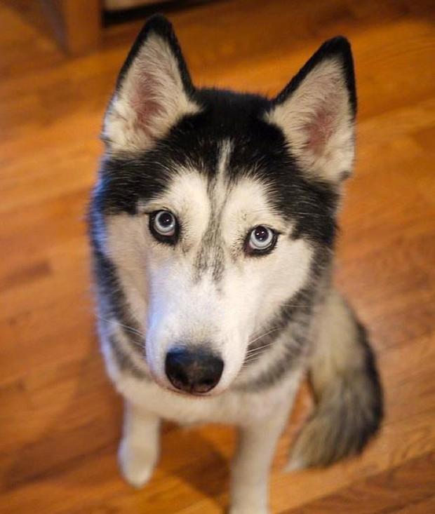 Khoa học cho rằng chó cũng có thể trò chuyện như con người vậy - Ảnh 1.