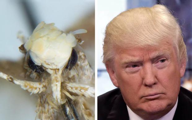 Sinh vật mới được đặt tên theo... Donald Trump vì một lý do chẳng ai ngờ tới - Ảnh 1.