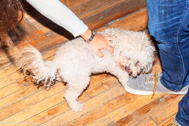 Bạn có biết: Nhân viên Uber tại Manhattan có thể đem chó cưng tới văn phòng? - Ảnh 6.