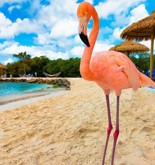 Nóng như thế này chỉ muốn đến ngay chốn thiên đường này tắm biển, chụp ảnh sống ảo cùng hồng hạc mà thôi! - Ảnh 19.