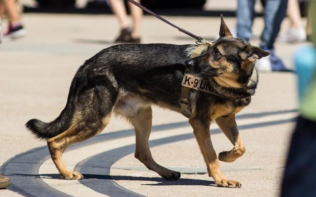 Bạn sẽ kinh ngạc khi biết đến quy trình chặt chẽ để huấn luyện một chú chó cảnh sát - Ảnh 2.