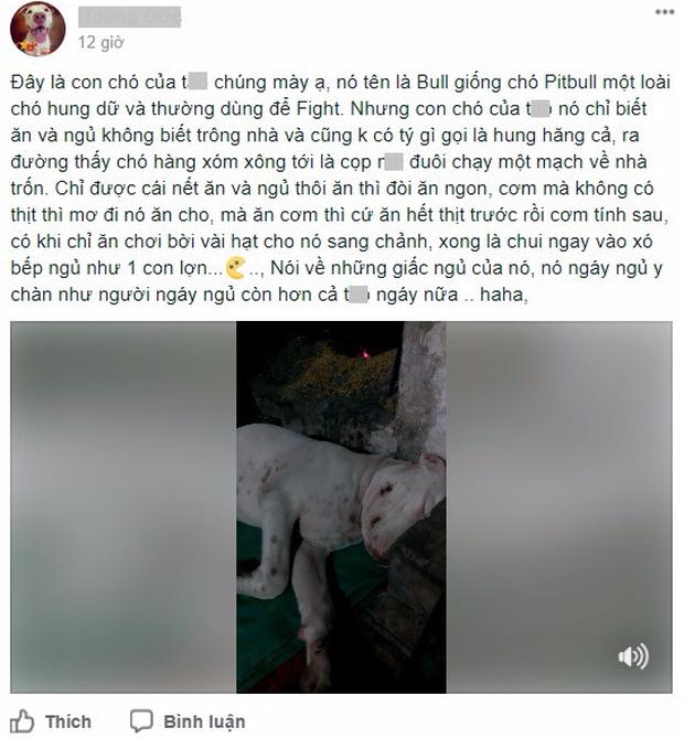Clip: Chú chó Pit bull chỉ biết ăn với ngủ ngáy, không biết trông nhà và sợ tất cả chó hàng xóm - Ảnh 1.