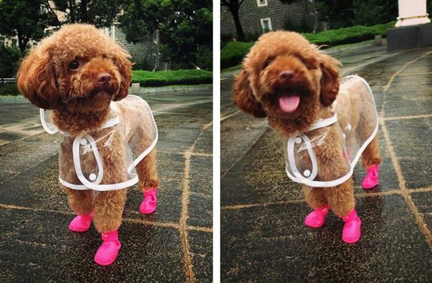 Trời mưa lạnh thế này, sắm ngay một chiếc áo mưa siêu cấp đáng yêu cho cún thôi nào - Ảnh 4.