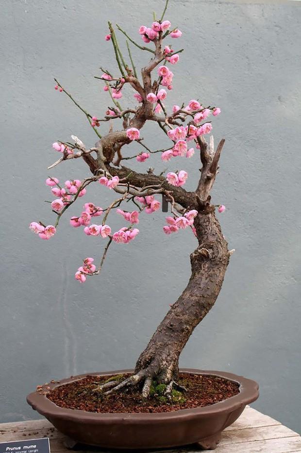Ngất ngây với 15 chậu hoa bonsai mini siêu đẹp để trang trí nhà dịp Tết - Ảnh 13.