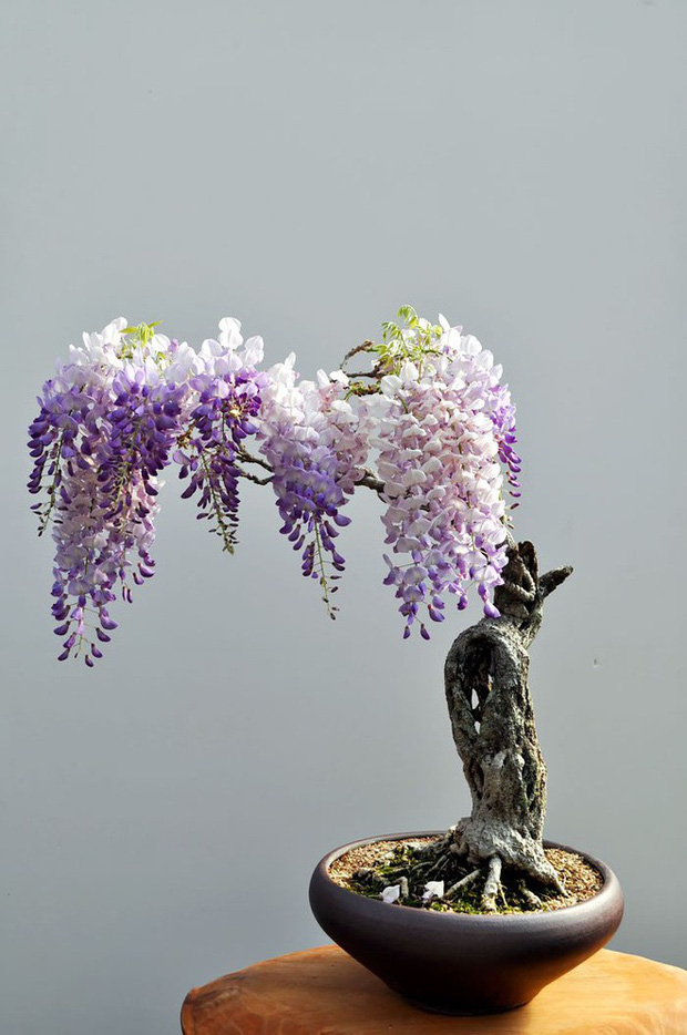 Ngất ngây với 15 chậu hoa bonsai mini siêu đẹp để trang trí nhà dịp Tết - Ảnh 6.