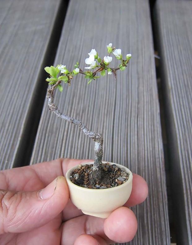Ngất ngây với 15 chậu hoa bonsai mini siêu đẹp để trang trí nhà dịp Tết - Ảnh 10.