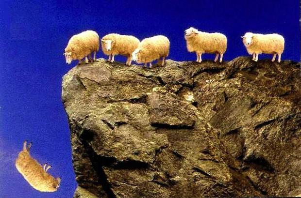 1.500 con cừu bỗng tự tử hàng loạt - bí ẩn 13 năm vẫn chưa có lời giải - Ảnh 1.