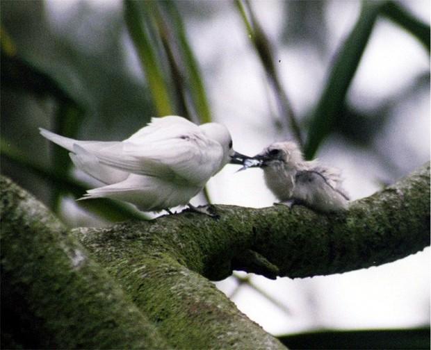 Loài chim lười nhất thế giới: Đẻ trứng trên cành cây, rơi vỡ đẻ quả khác - Ảnh 4.