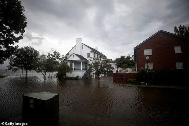 Hậu bão Florence, cư dân Bắc Carolina đang phải đối mặt với cơn bão ếch nhái lên tới hàng chục nghìn con - Ảnh 3.