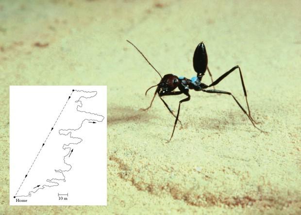 Đây là loài kiến kỳ lạ nhất sa mạc: Giải được cả toán lượng giác nhưng... quên luôn quê hương nếu thấy đồ ngon - Ảnh 4.