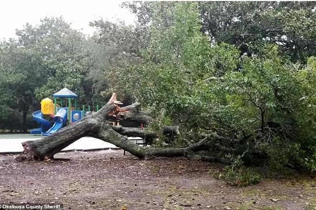 Siêu bão Michael đổ bộ vào Mỹ và Panama với sức tàn phá khủng khiếp - Ảnh 19.
