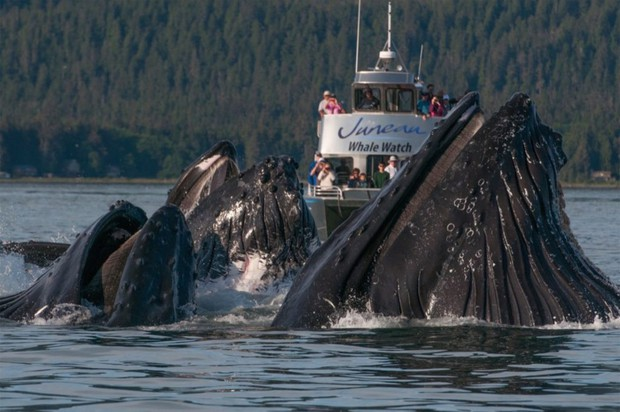 Cả nhà đi thuyền xem cá voi cho biết, ai ngờ cá to quá khiến bà mẹ òa khóc rồi gọi điện báo công an - Ảnh 1.