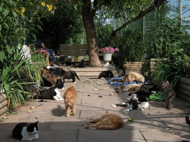 Ghé thăm RAPS - thánh địa của những con mèo bị bỏ rơi lớn nhất Bắc Mỹ - Ảnh 1.