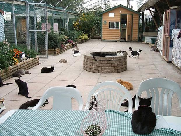 Ghé thăm RAPS - thánh địa của những con mèo bị bỏ rơi lớn nhất Bắc Mỹ - Ảnh 2.