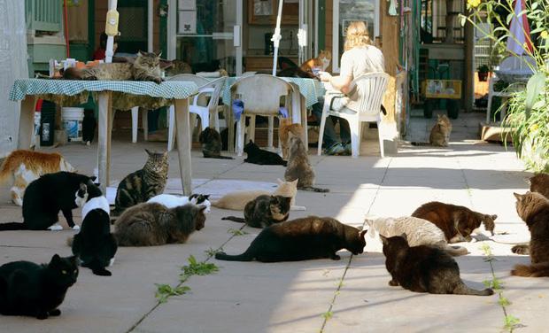Ghé thăm RAPS - thánh địa của những con mèo bị bỏ rơi lớn nhất Bắc Mỹ - Ảnh 3.