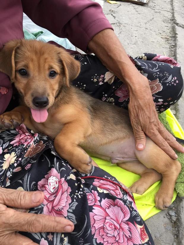 Xúc động hình ảnh cụ bà mắc bệnh nên phải bán chó con, cho người khác nuôi chó mẹ vì không nuôi nổi - Ảnh 2.
