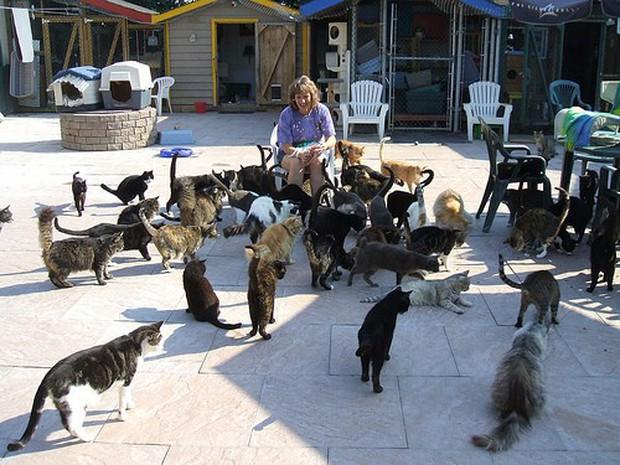 Ghé thăm RAPS - thánh địa của những con mèo bị bỏ rơi lớn nhất Bắc Mỹ - Ảnh 4.