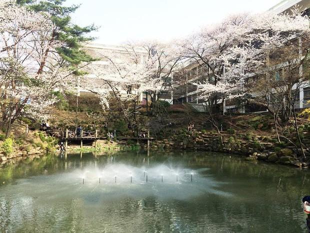Đây là ngôi trường đã đào tạo ra hàng loạt tên tuổi gạo cội của làng giải trí Hàn Quốc như Lee Soon-jae, Kim Tae-hee - Ảnh 17.