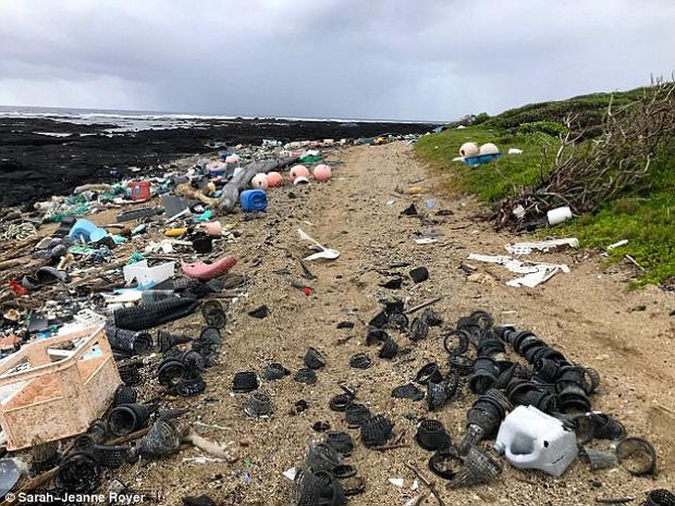 Thêm một hình ảnh đau lòng nữa về ô nhiễm rác nhựa: cá mập chết khi đang ngậm vỏ chai nước - Ảnh 2.