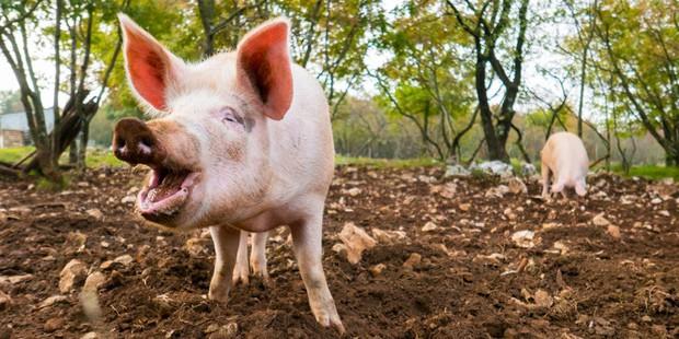Nước Mỹ có 9 điều luật quái lạ về động vật, riêng con thứ 9 chưa chắc đã tồn tại - Ảnh 3.