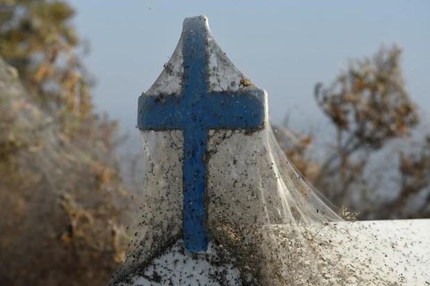 Ảnh: Rợn người cảnh mạng nhện phủ kín vùng Hồ Vistonida, Hy Lạp - Ảnh 1.