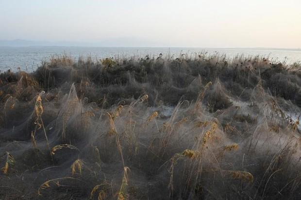 Ảnh: Rợn người cảnh mạng nhện phủ kín vùng Hồ Vistonida, Hy Lạp - Ảnh 4.