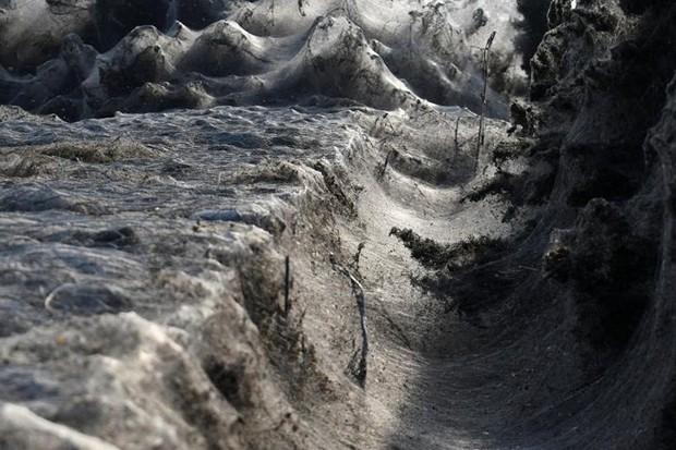 Ảnh: Rợn người cảnh mạng nhện phủ kín vùng Hồ Vistonida, Hy Lạp - Ảnh 5.