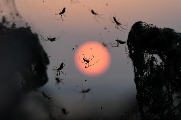 Ảnh: Rợn người cảnh mạng nhện phủ kín vùng Hồ Vistonida, Hy Lạp - Ảnh 6.