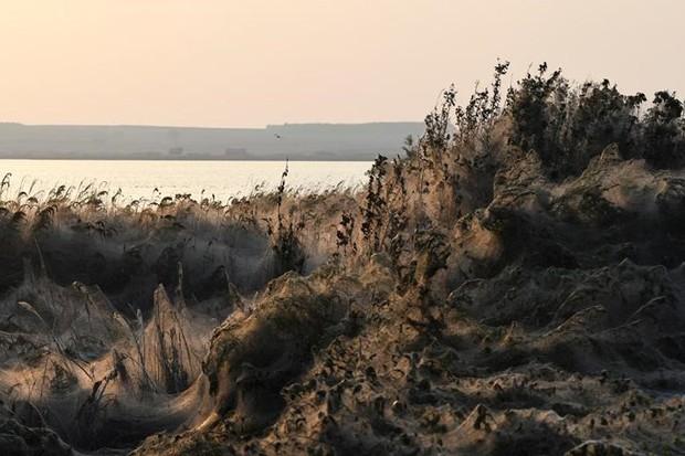 Ảnh: Rợn người cảnh mạng nhện phủ kín vùng Hồ Vistonida, Hy Lạp - Ảnh 7.
