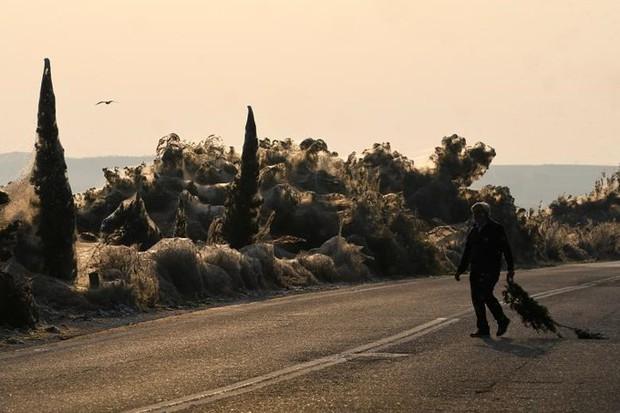 Ảnh: Rợn người cảnh mạng nhện phủ kín vùng Hồ Vistonida, Hy Lạp - Ảnh 8.