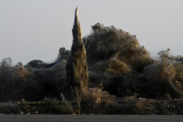 Ảnh: Rợn người cảnh mạng nhện phủ kín vùng Hồ Vistonida, Hy Lạp - Ảnh 9.