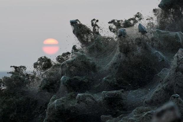 Ảnh: Rợn người cảnh mạng nhện phủ kín vùng Hồ Vistonida, Hy Lạp - Ảnh 10.